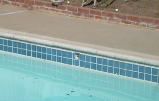 Leisure Time Pool Service Amp Repairtile Cleaning Leisure Time Pool Service Amp Repair